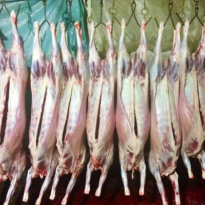 新疆维吾尔自治区吐鲁番地区吐鲁番市羊肉类 生肉