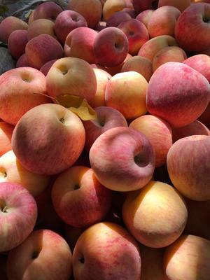 陕西省西安市雁塔区阿克苏冰糖心苹果 75mm以上 日晒面 纸+膜袋