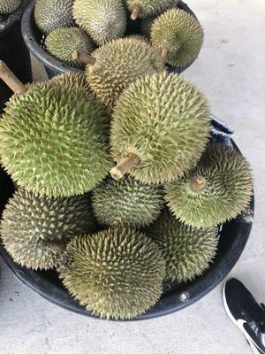 广东省广州市增城区苏丹王榴莲 1.3公斤 60 - 70%以上