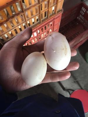浙江省绍兴市诸暨市土鸭蛋 食用 散装