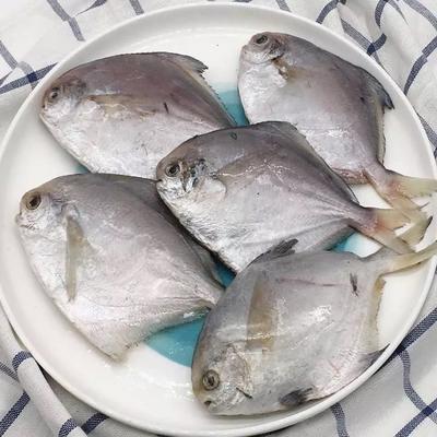 江苏省苏州市太仓市银鲳鱼 野生 0.5公斤以下