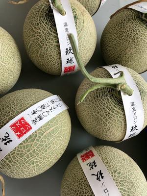 海南省海口市琼山区网纹蜜瓜 1.5斤以上
