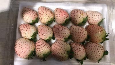 四川省成都市简阳市红颜草莓 20克以上