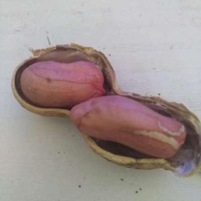 浙江省杭州市余杭区带壳花生 带壳花生 干货 山核桃味的好花生