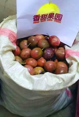 广西壮族自治区玉林市北流市紫红色百香果 40克以下 红果中小果皱果