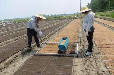 江苏省南通市如东县南粳5055大米 一等品 中稻 粳米