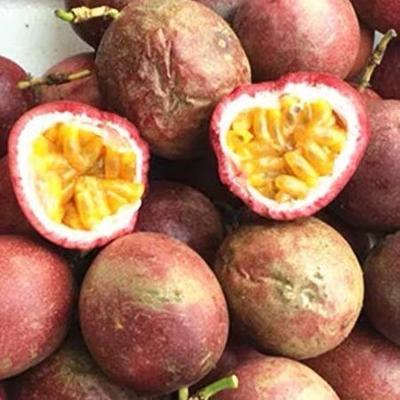 广西壮族自治区玉林市北流市紫红色百香果 40 - 50克 红果中小果皱果