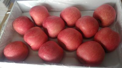 山东省烟台市蓬莱市红富士苹果 80mm以上 片红 纸袋
