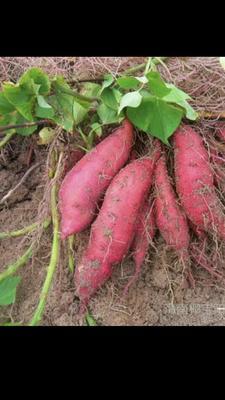 这是一张关于红心红薯 红皮 2两以下 的产品图片