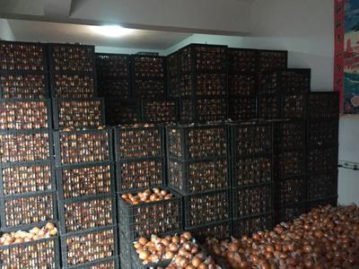 湖南省怀化市麻阳苗族自治县麻阳冰糖橙 65 - 70mm 4-8两