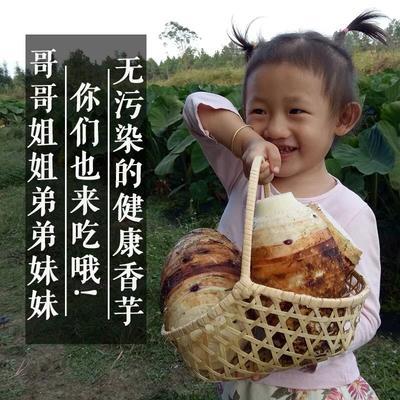 广西壮族自治区南宁市江南区香芋 5cm以上