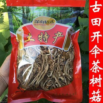 福建省宁德市古田县干茶树菇 开伞茶树菇
