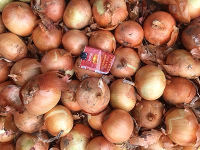 黑龙江省齐齐哈尔市梅里斯达斡尔族区红葱头