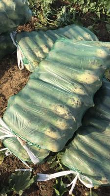 山东省潍坊市寿光市青萝卜 1~1.5斤