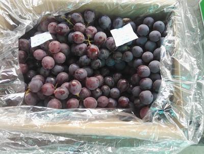 河北省石家庄市晋州市巨峰葡萄 0.8-1斤 5%以下 2次果