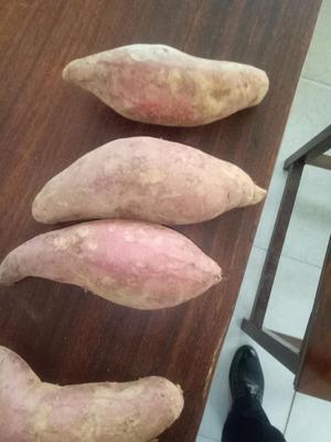这是一张关于西瓜红 3两~6两 红皮 的产品图片