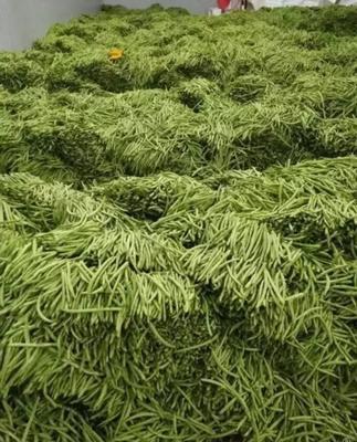 四川省攀枝花市仁和区白花四季豆 10cm以上