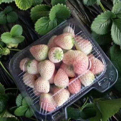 北京昌平区白雪公主草莓 20克以上
