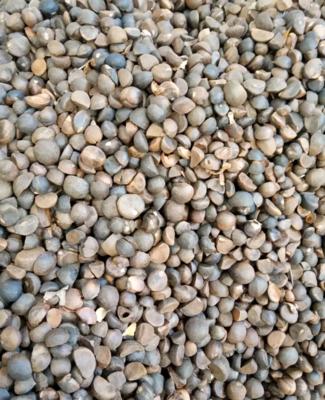 湖北省黄冈市麻城市油茶籽