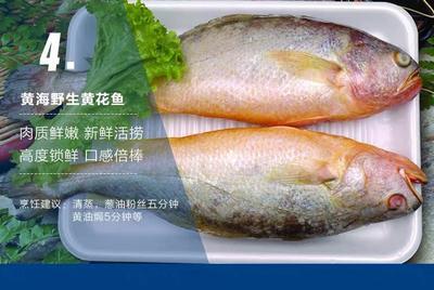 山东省烟台市莱山区大黄鱼 1-1.5公斤 野生