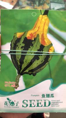 山东省潍坊市寿光市观赏玉女南瓜种子 70%