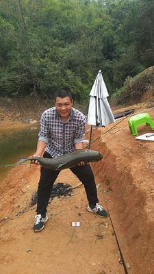 广东省茂名市电白区网箱草鱼 1.5-3.5公斤 人工养殖