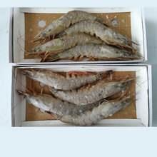 山东省烟台市莱山区中国对虾 3-5钱 野生