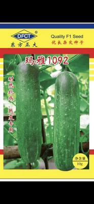 广东省梅州市平远县开元棋牌平台黄瓜种子 杂交种 ≥90%