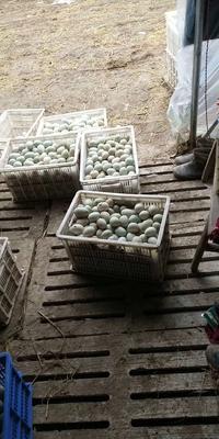 安徽省蚌埠市怀远县麻鸭蛋 散装 食用