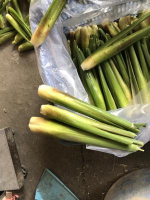 福建省漳州市龙海市茭白笋 25-35cm