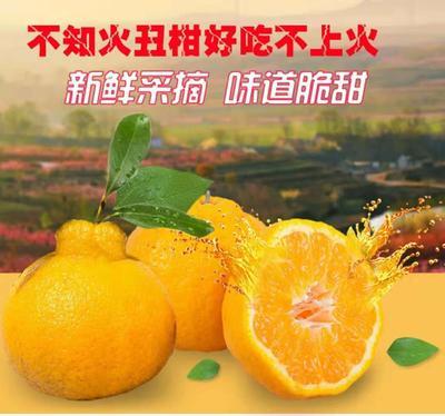 四川省内江市资中县不知火 7.5 - 8cm 3两以上