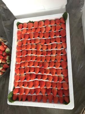 这是一张关于甜查理草莓 30克以上 的产品图片