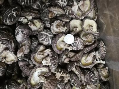 广东省清远市英德市野生香菇 干香菇 2.5cm~4cm 冬菇
