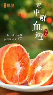 四川省内江市资中县塔罗科血橙 4两以下 60 - 65mm