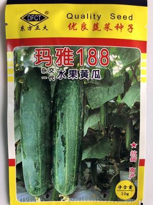这是一张关于开元棋牌平台黄瓜种子 杂交种 ≥90% 的产品图片