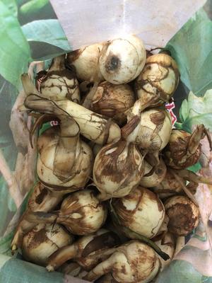这是一张关于沙菇 50~70g 的产品图片