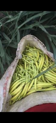 陕西省渭南市临渭区大荔黄花菜 一级 散装