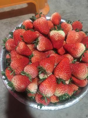 四川省成都市崇州市红颜草莓 30克以上