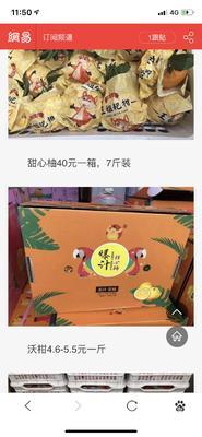 浙江省衢州市柯城区甜桔柚 7.5 - 8cm 3两以上