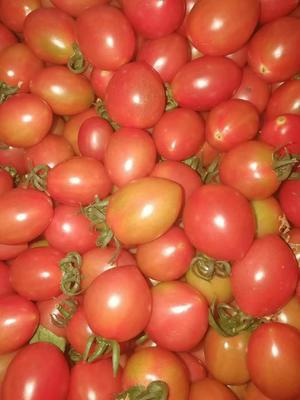 山东省潍坊市坊子区409小柿子