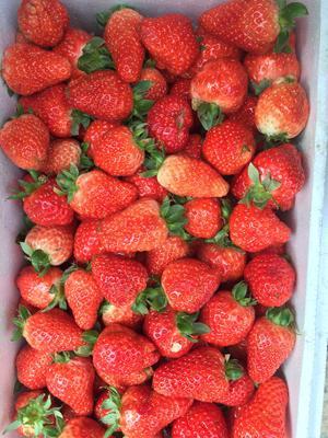 河北省保定市满城县章姬草莓 20克以上
