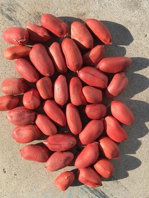 吉林省白城市洮北区四粒红花生 花生米 干货