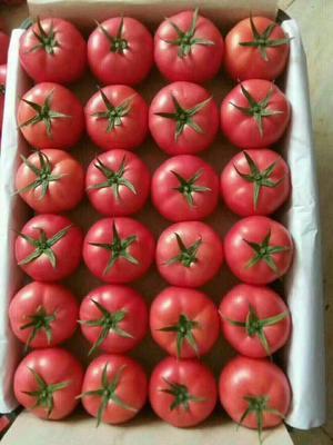 这是一张关于硬粉番茄 弧三以上 通货 硬粉 的产品图片