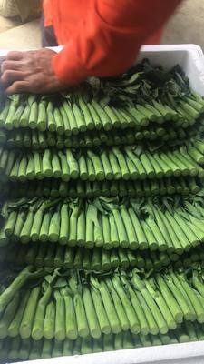 这是一张关于广州芥兰 12cm以上 的产品图片