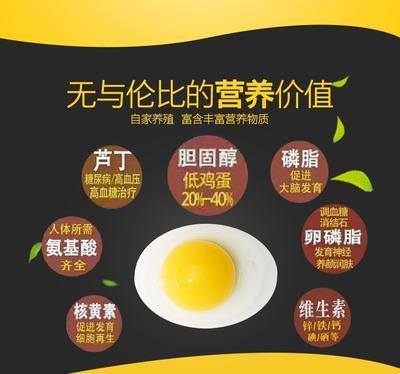 这是一张关于芦丁蛋 孵化 箱装 的产品图片
