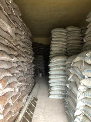 黑龙江省牡丹江市宁安市红松子 包装 12-18个月