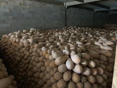 云南省红河哈尼族彝族自治州弥勒市蜜本南瓜 混装通货