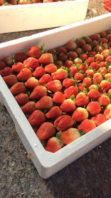 江苏省徐州市贾汪区甜查理草莓 40克以上