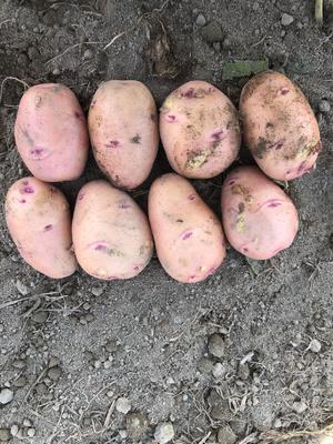 这是一张关于合作88号土豆 4两以上 的产品图片