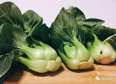 江苏省苏州市常熟市苏州青白菜 15~20cm